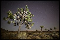 Joshua trees and starry sky. Joshua Tree National Park ( color)