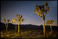 Joshua trees at night. Joshua Tree National Park ( color)