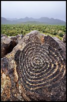 Circular Hohokam petroglyphs on Signal Hill. Saguaro National Park, Arizona, USA.