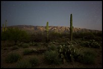 Cactus, Rincon Mountains, and star field at night. Saguaro National Park ( color)