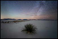 Yucca and Milky Way. White Sands National Park ( color)