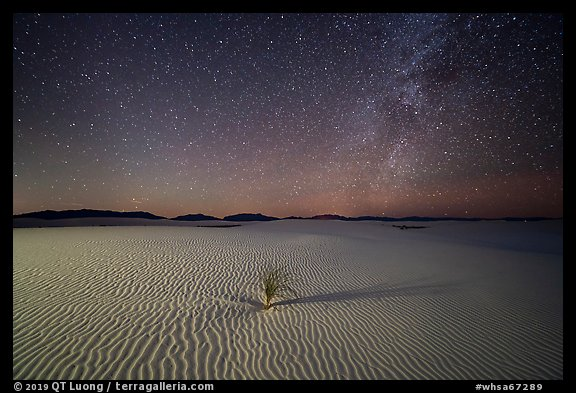 Yucca and ripples and night. White Sands National Park, New Mexico, USA.
