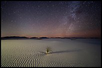 Yucca and ripples and night. White Sands National Park ( color)