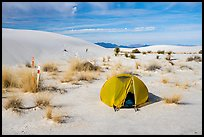 Tent at backcountry campsite. White Sands National Park ( color)