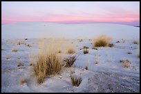 Little Bluestem and Alkali Sacaton grasses between dunes at sunset. White Sands National Park ( color)
