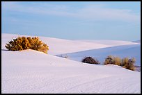 Srubs in dune field. White Sands National Park ( color)