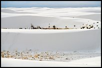 Dune ridges and dune vegetation. White Sands National Park ( color)