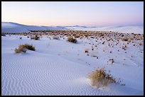 Shrubs and dunes at twilight. White Sands National Park ( color)