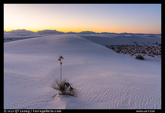 Dunes and soaptree Yucca in autumn at sunset. White Sands National Park (color)