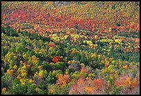 Valley filled  with trees in autumn foliage. Acadia National Park, Maine, USA. (color)