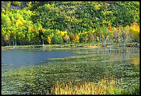 Pond and autumn colors. Acadia National Park, Maine, USA. (color)