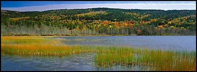 Marsh and hill in autumn foliage. Acadia National Park, Maine, USA.