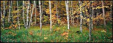 Forest in autumn. Acadia National Park, Maine, USA.