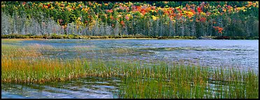 Pond, reeds and trees in autumn. Acadia National Park, Maine, USA.