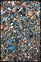 Pebbles of various sizes and colors. Acadia National Park ( color)