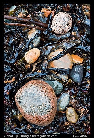 Pebbles and seaweeds. Acadia National Park (color)