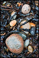 Pebbles and seaweeds. Acadia National Park, Maine, USA. (color)