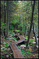 Boardwalk in forest. Acadia National Park, Maine, USA.