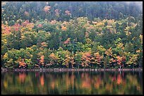 Hillside with trees in autumn colors and pond reflections. Acadia National Park, Maine, USA.