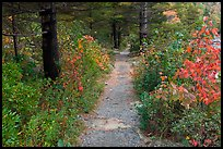 Trail in autumn on Jordan Pond shores. Acadia National Park, Maine, USA.
