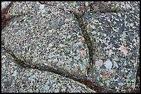 Multicolored lichen on granite slab, Cadillac Mountain. Acadia National Park, Maine, USA. (color)