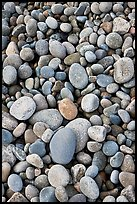Close-up of smooth pebbles, Schoodic Peninsula. Acadia National Park, Maine, USA. (color)