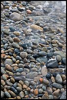 Close-up of pebbles and water, Schoodic Peninsula. Acadia National Park, Maine, USA. (color)