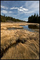 Grasses and pond, Schoodic Peninsula. Acadia National Park, Maine, USA.