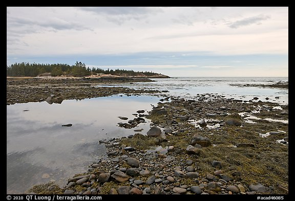 Seaweed and pebbles at low tide, Schoodic Peninsula. Acadia National Park, Maine, USA.