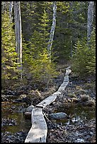 Boardwalk in forest, Isle Au Haut. Acadia National Park, Maine, USA.