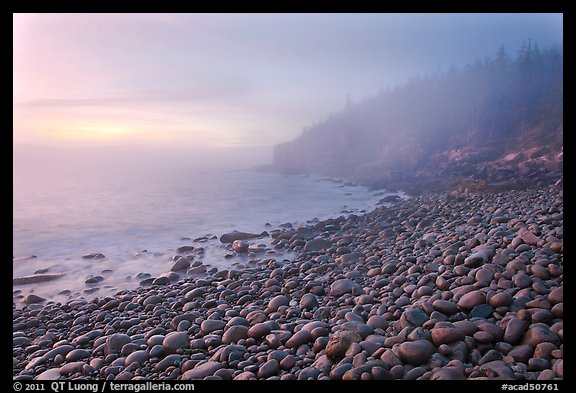 Boulder beach and cliffs in fog, dawn. Acadia National Park (color)