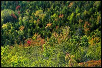 Shrubs and trees on hillside, early fall. Acadia National Park ( color)