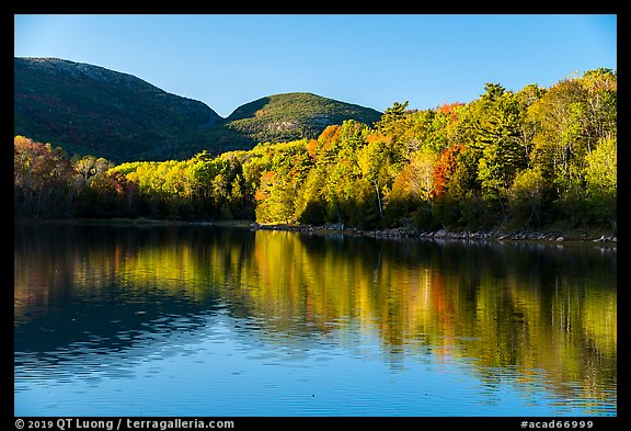 Trees in autumn foliage reflected in pond, Otter Creek. Acadia National Park (color)