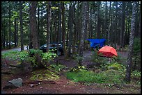 Blackwoods Campground. Acadia National Park ( color)
