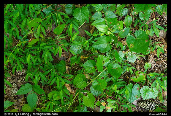 Close-up of forest floor. Congaree National Park (color)