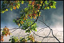 Branches, leaves, and mist, Kendall Lake. Cuyahoga Valley National Park, Ohio, USA.