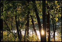 Sun reflected on a pond through trees, Virginia Kendall Park. Cuyahoga Valley National Park ( color)