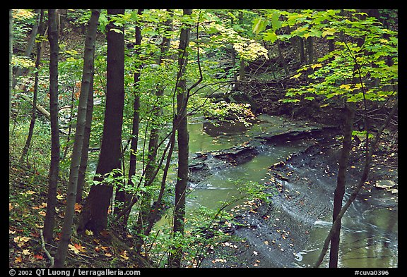 Trees and Brandywine Creek with cascades. Cuyahoga Valley National Park, Ohio, USA.