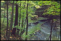 Trees and Brandywine Creek with cascades. Cuyahoga Valley National Park ( color)
