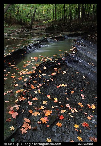Fallen leaves and cascades, Brandywine Creek. Cuyahoga Valley National Park (color)