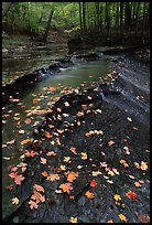 Fallen leaves and cascades, Brandywine Creek. Cuyahoga Valley National Park ( color)