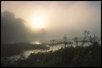 Beaver marsh at sunrise. Cuyahoga Valley National Park ( color)