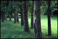 Trees and grassy meadow. Cuyahoga Valley National Park ( color)
