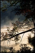 Fallen tree and mist, Kendall Lake. Cuyahoga Valley National Park ( color)