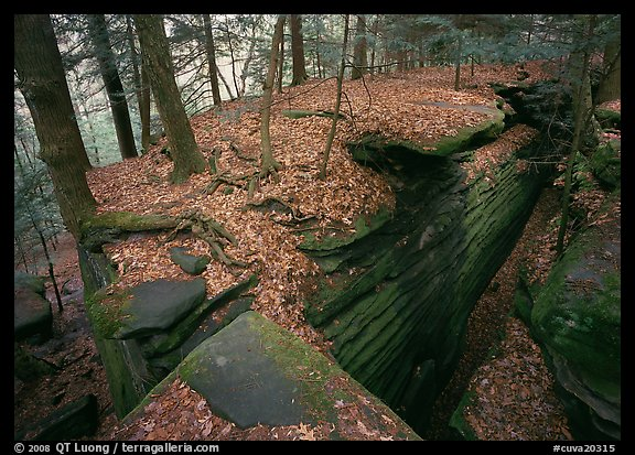 Sandstone cracks, moss, fallen leaves, and trees with bare roots. Cuyahoga Valley National Park, Ohio, USA.