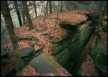 Sandstone cracks, moss, fallen leaves, and trees with bare roots, The Ledges. Cuyahoga Valley National Park ( color)