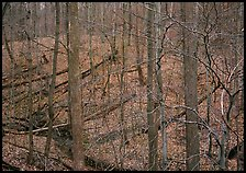 Barren trees and fallen leaves on hillside. Cuyahoga Valley National Park ( color)