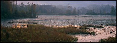 Marsh landscape at dawn. Cuyahoga Valley National Park (Panoramic color)
