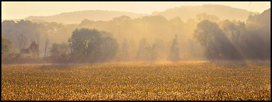 Sunrays in distant mist above field. Cuyahoga Valley National Park (Panoramic color)