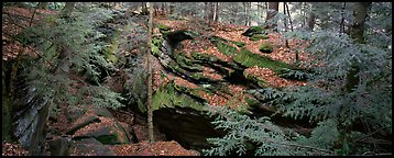 Forest scene with moss-covered limestone rocks. Cuyahoga Valley National Park (Panoramic color)